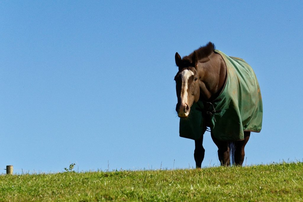 Horse wearing a blanket in a field.