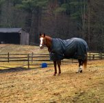 We Review The 6 Best Horse Blankets For Sale In 2019
