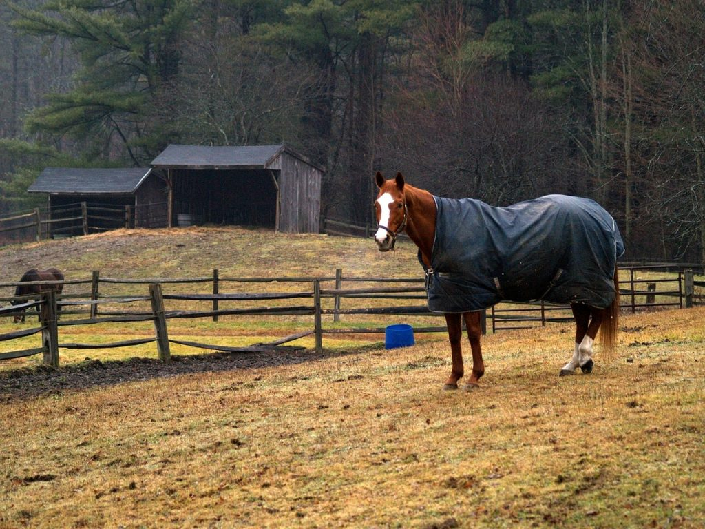 Horse wearing a turnout blanket.