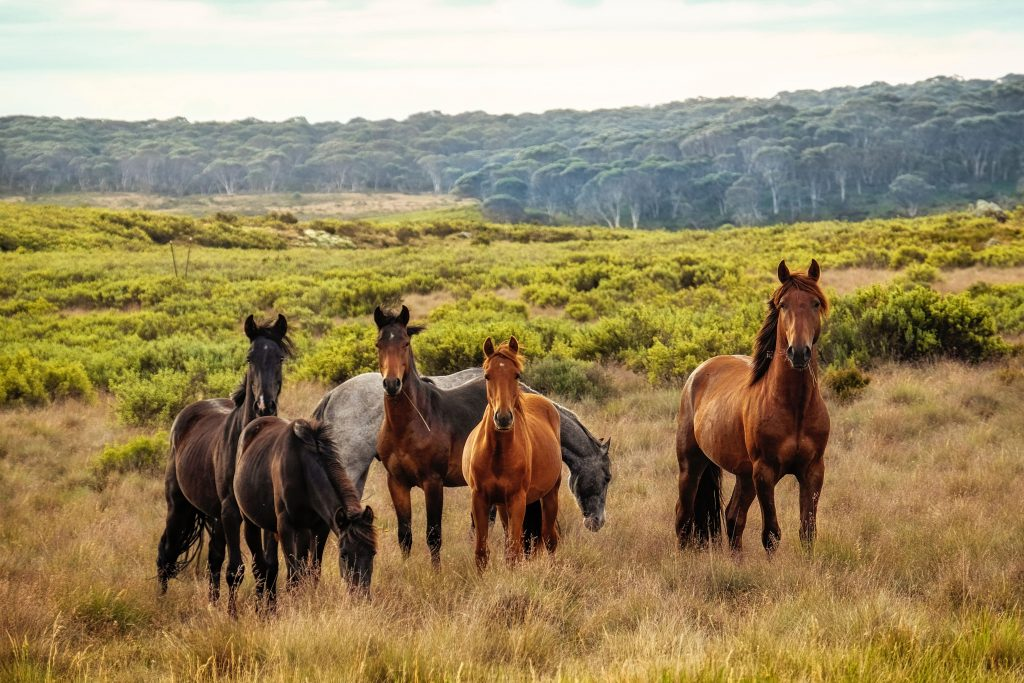Horses in a paddock.