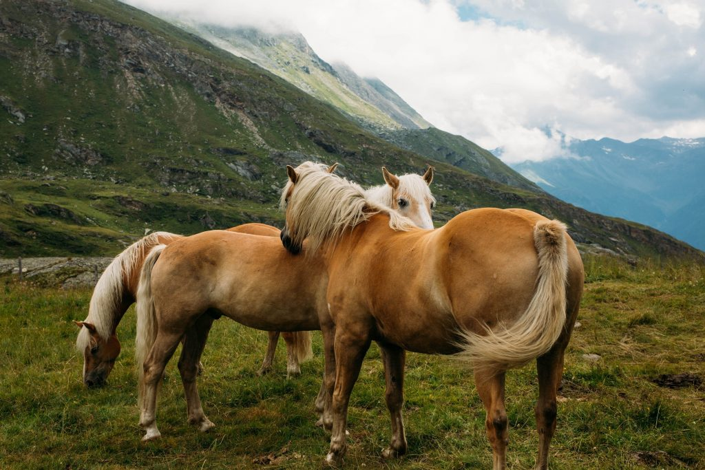 Horses on a mountaintop.